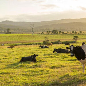 Canterbury Farming Article Nov 2020